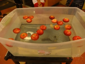 bobbing for apples...aka bobbing for pink eye!