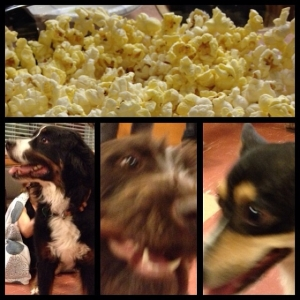 popcorn at puppy therapy!