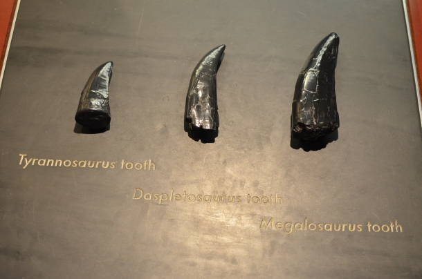 tooth comparisons