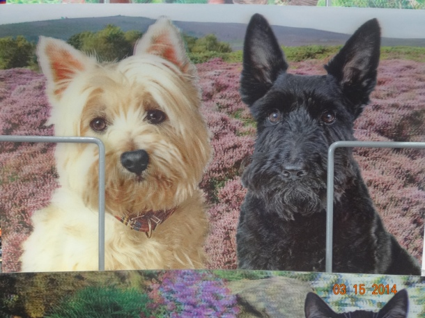 Westie and Scottish Terrier